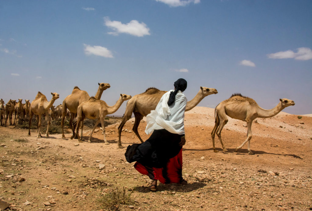 The Great Camel Herders